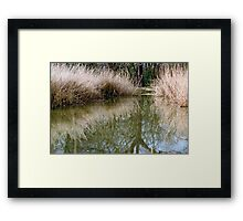 Reed bed reflection Framed Print