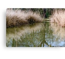 Reed bed reflection Canvas Print