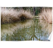 Reed bed reflection Poster