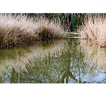 Reed bed reflection Photographic Print