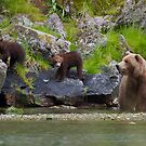 Mom and The Cubs by Tim Grams