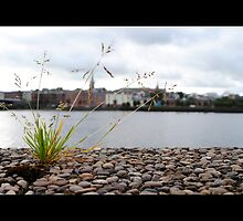 The River Foyle by Sarah Cowan