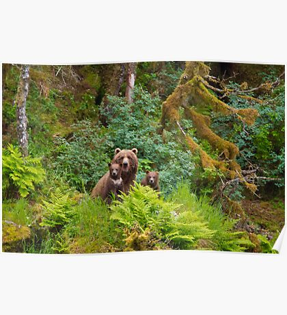 Grizzly Bears in a Rain Forest Poster