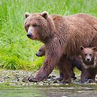Along the Salmon Stream by Tim Grams