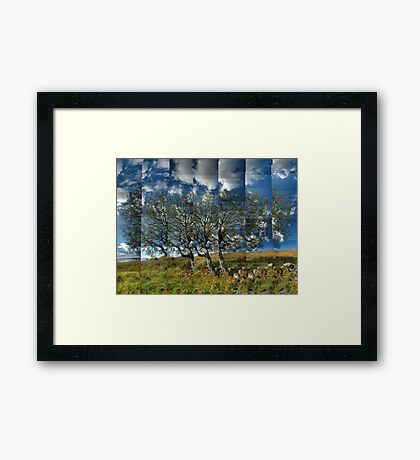 Willow on the Wall Framed Print