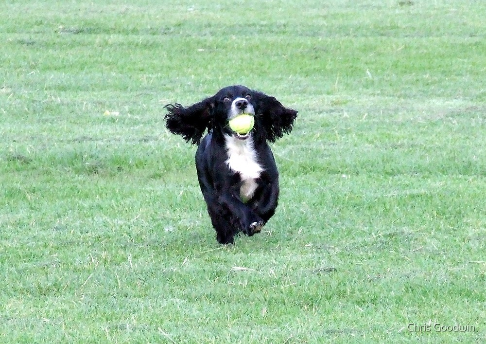 Run Like The Wind by Chris Goodwin