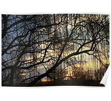 Willow SUnrise Poster