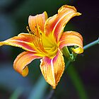 Brightest Day Lily by nastruck