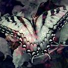 Swallowtail 3 by Diane Johnson-Mosley