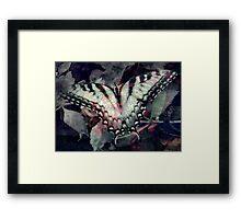 Swallowtail 3 Framed Print