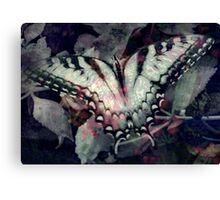 Swallowtail 3 Canvas Print