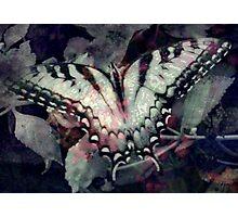 Swallowtail 3 Photographic Print