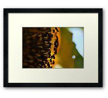 Sun flower macro Framed Print