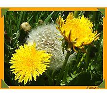 Flower Family Photographic Print