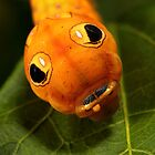 Spicebush Swallowtail Caterpillar by Rob Lavoie