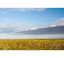 morass grass in sun rising  Photographic Print