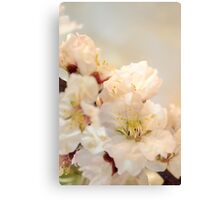 Beautiful blossoms on white Canvas Print