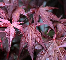 Red Droplet's by Stephen J  Dowdell