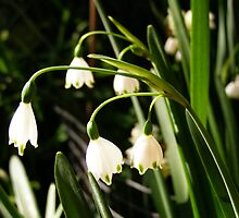 'LAMP LIGHT IN THE GARDEN!' Snowdrop time. by Rita Blom