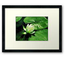 Beautiful Lilypad Framed Print