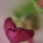 heart-shaped purple bud at kingwood center by 1busymom