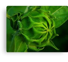 One More ! Canvas Print