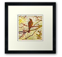 Honey Eater & Banksia # 1  Framed Print