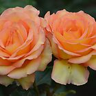 Peachy Pair of Roses... by Carol Clifford