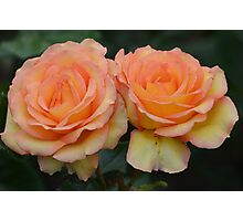 Peachy Pair of Roses... Photographic Print