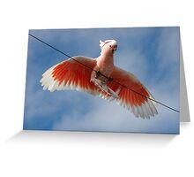 Major Mitchell's Cockatoo (Pink Cockatoo) ~ Circus Act Greeting Card