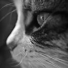 The Sight of a Cat by Tyhe  Reading