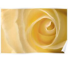 Delicate yellow rose Poster