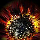 Firey Sunflower by Jonice