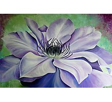 Chantilly Clematis Photographic Print