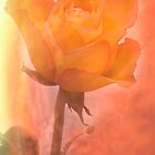 Flaming Rose by Ray Clarke