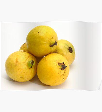 Guava fruits Poster