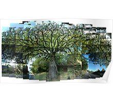 Old Oak, Spring, Argyll Poster