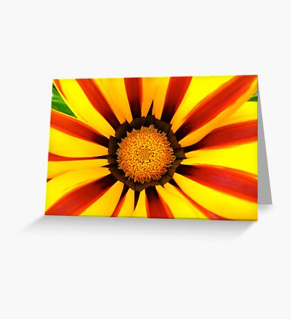 Vibrant Spring - Striped Gazania Greeting Card