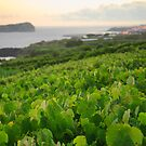 Grapevines and islet by Gaspar Avila