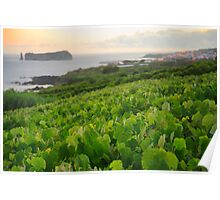 Grapevines and islet Poster