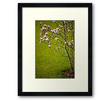 Vibrant pink Magnolia blossoms  Framed Print