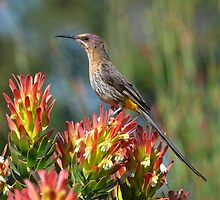 Nectar Feeder by Macky