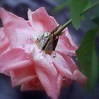 Rose in Pink by Lozzar Flowers & Art