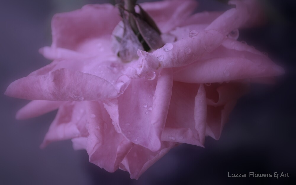 Rose in Soft Pink by Lozzar Flowers & Art