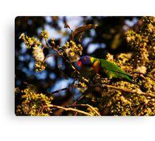 Garden Birds, Rainbow Lorikeet in Gum Tree Canvas Print