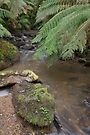 Upper Tarra River by mspfoto