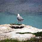 Birds eye view by Rocksygal52