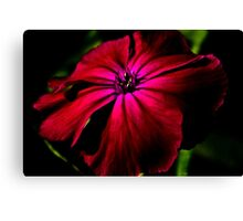 Purple Wild Flower Canvas Print
