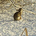 Rabbit in the snow by John Butterfield