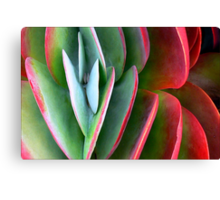 Kalanchoe Aglow  Canvas Print